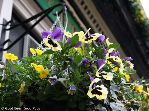 Picture of the Harp in Covent Garden - hanging baskets